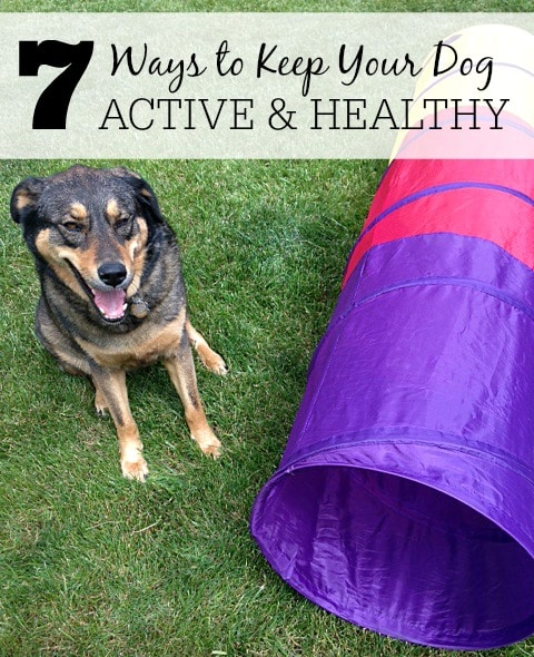 7 Ways To Keep Your Dog Active And Healthy
