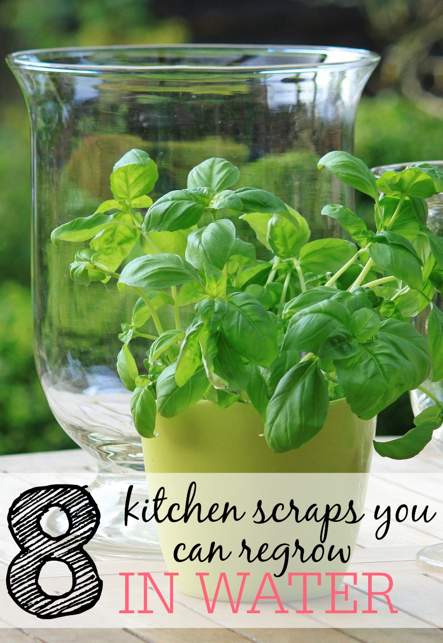 8 Kitchen Scraps You Can Regrow In Water