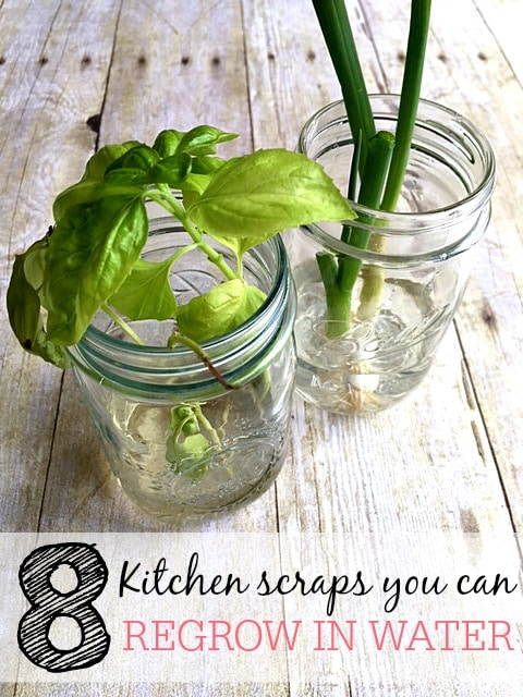 kitchen scraps you can regrow in water