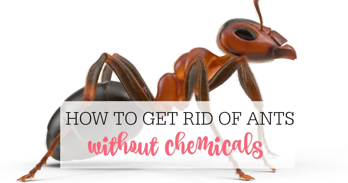 How Can I Get Rid Of Ants Naturally