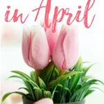 things to buy in april