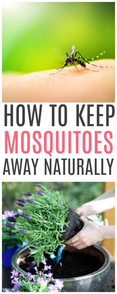keep mosquitoes away