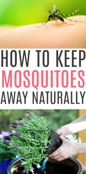 keep mosquitoes away naturally