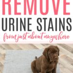 how to remove urine stains from anywhere
