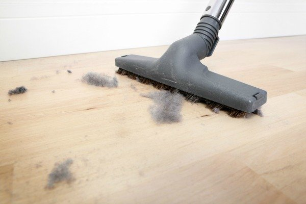 keep moths away by dusting and vacuuming